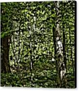In The Woods Wc Canvas Print