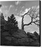 In Time There Is Motion Black And White  Canvas Print by James Steele