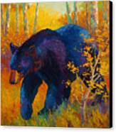In To Spring - Black Bear Canvas Print by Marion Rose