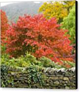 Incredible Fall Colors Canvas Print