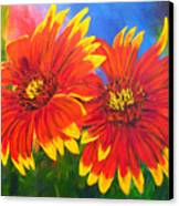 Indian Blanket Flowers Canvas Print
