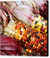Indian Corn Canvas Print
