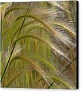 Indiangrass Swaying Softly With The Wind Canvas Print