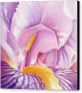 Inside Iris Canvas Print