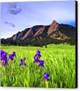 Iris And Flatirons Canvas Print