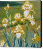 Iris Etude Canvas Print