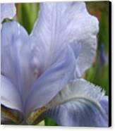 Iris Flower Blue 2 Irises Botanical Garden Art Prints Baslee Troutman Canvas Print