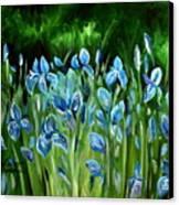Iris Galore Canvas Print