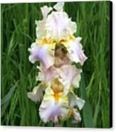 Iris In Grass Canvas Print