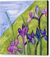 Iris Meadow Canvas Print