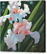 Iris Pour Une Belle Femme Canvas Print