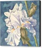 Iris Twenty One Canvas Print