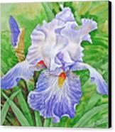 Iris.drops Of Dew .2007 Canvas Print