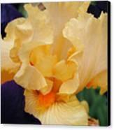 Irises Art Prints Peach Iris Flowers Artwork Floral Botanical Art Baslee Troutman Canvas Print