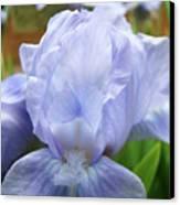Irises Blue Iris Flower Light Blue Art Flower Soft Baby Blue Baslee Troutman Canvas Print