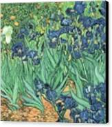 Irises Canvas Print by Vincent Van Gogh