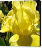Irises Yellow Iris Flowers Floral Art Prints Botanical Garden Artwork Giclee Canvas Print