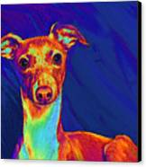 Italian Greyhound  Canvas Print by Jane Schnetlage