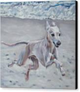 Italian Greyhound On The Beach Canvas Print