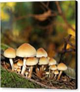 It's A Small World Mushrooms Canvas Print by Jennie Marie Schell
