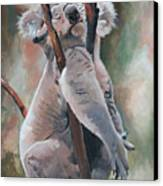Its About Trust - Koala Bear Canvas Print
