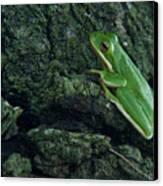 Its Hard To Be Green Canvas Print by Douglas Barnett
