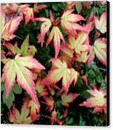 Japanese Maple Canvas Print by Cynthia Adams