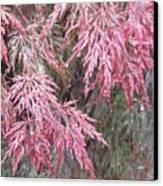 Japanese Maple In The Rain Canvas Print