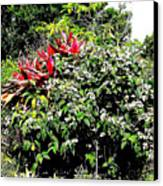 Jardinagem Canvas Print by Eikoni Images