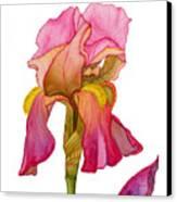 Jody's Iris Canvas Print