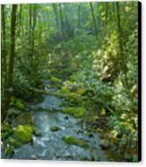 Joyce Kilmer Memorial Forest Canvas Print