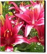 Joyful Red Lillies Canvas Print
