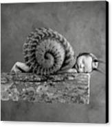 Julia Snail Canvas Print by Anne Geddes