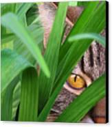 Jungle Cat Canvas Print by Bob Nolin