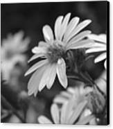 Just Black And White Canvas Print