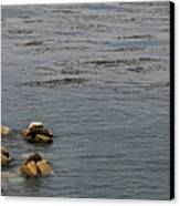 Kayakers And Seal Lions Canvas Print