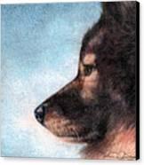 Keeshond Canvas Print by Melissa J Szymanski