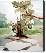 Kennedy Meadows Tree Canvas Print