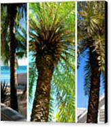 Key West Palm Triplets Canvas Print by Susanne Van Hulst