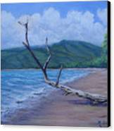 Kihei Beach Tree Canvas Print