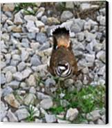 Kildeer And Eggs Canvas Print by Douglas Barnett