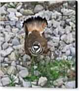 Kildeer And Nest Canvas Print