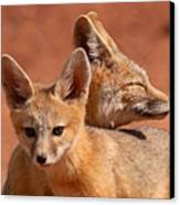 Kit Fox Pup Snuggling With Mother Canvas Print by Max Allen