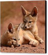 Kit Fox Pups On A Lazy Day Canvas Print