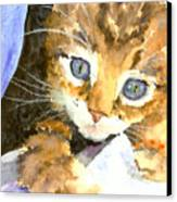 Kitten In Blue Canvas Print