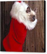 Kitten In Stocking Canvas Print by Garry Gay