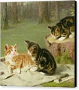 Kittens Playing Canvas Print by Ewald Honnef