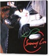 Kitty In A Box Canvas Print
