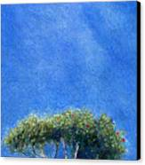 Kokee Trees Canvas Print