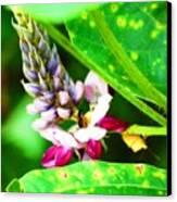 Kudzoo Flower Canvas Print